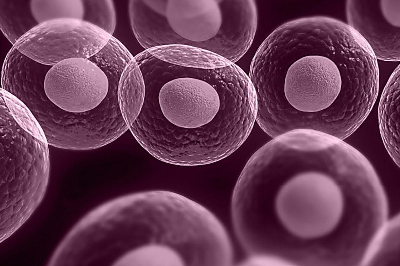 komórki macierzyste